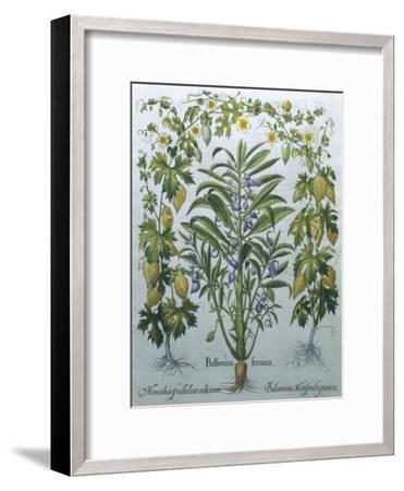 Balsamina Foemina-Besler Basilius-Framed Giclee Print