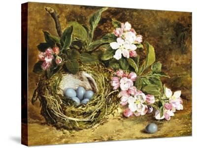 Apple Blossom and a Bird's Nest-H. Barnard Grey-Stretched Canvas Print