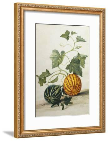 Study of Gourds-Pieter Withoos-Framed Giclee Print