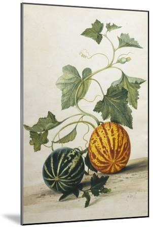 Study of Gourds-Pieter Withoos-Mounted Giclee Print