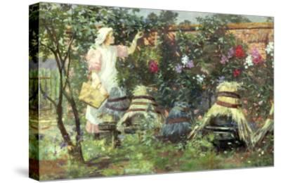 Picking Fruit in a Suffolk Garden-Lexden Lewis Pocock-Stretched Canvas Print
