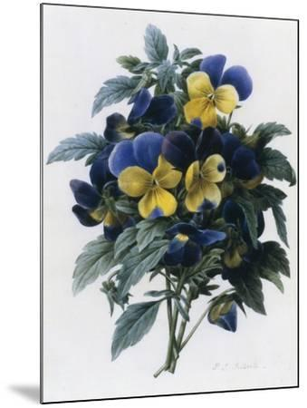 Pansies-Pierre-Joseph Redout?-Mounted Giclee Print