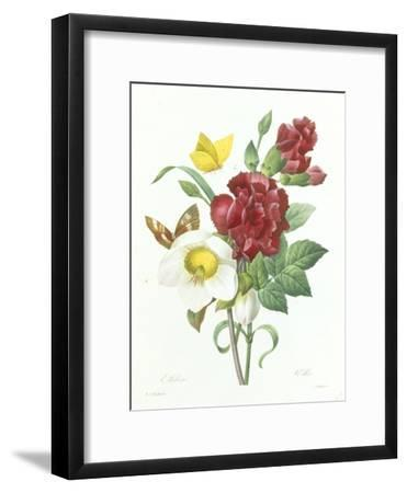 Botanical Study of Hellebore-Pierre-Joseph Redout?-Framed Giclee Print