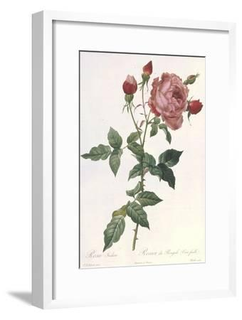 Bouquet of Rose, Anemone and Clematis-Pierre-Joseph Redout?-Framed Giclee Print