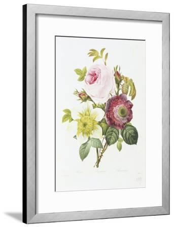 Study of Pink Roses and Convulvulus-Pierre-Joseph Redout?-Framed Giclee Print