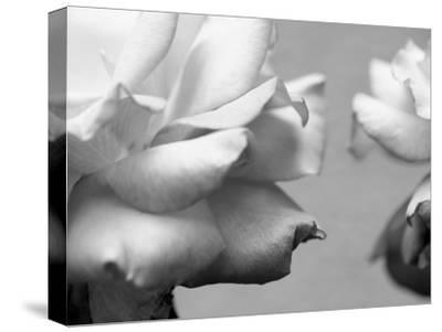 Rose Petals II-Nicole Katano-Stretched Canvas Print