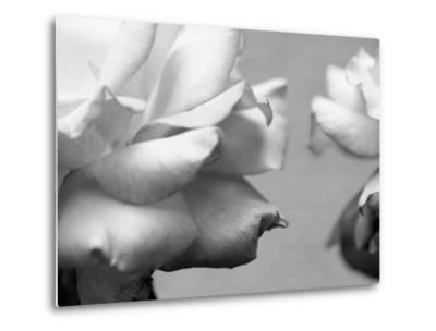 Rose Petals II-Nicole Katano-Metal Print