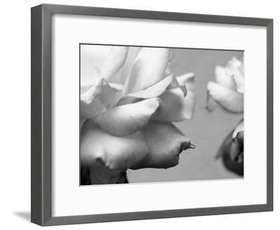 Rose Petals II-Nicole Katano-Framed Photo