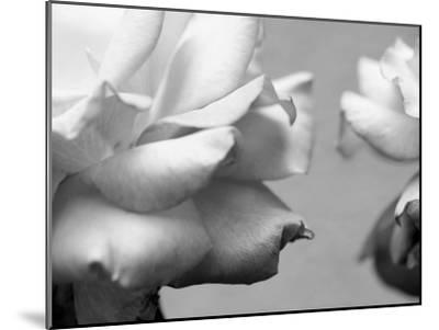 Rose Petals II-Nicole Katano-Mounted Photo