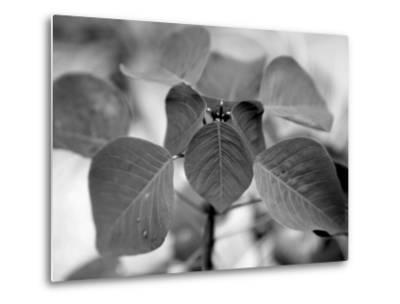Royal Burgundy Leaves I-Nicole Katano-Metal Print