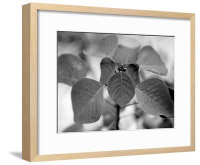 Royal Burgundy Leaves I-Nicole Katano-Framed Photo