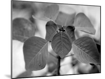 Royal Burgundy Leaves I-Nicole Katano-Mounted Photo
