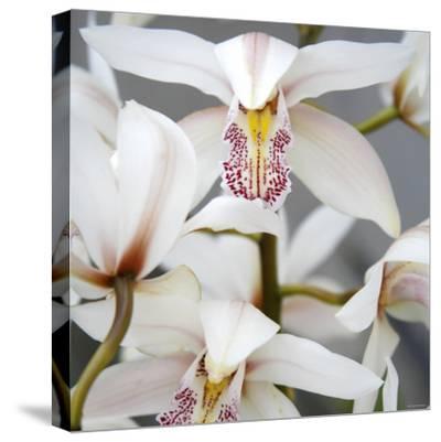 Orchid Closeup I-Nicole Katano-Stretched Canvas Print