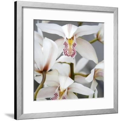 Orchid Closeup I-Nicole Katano-Framed Photo
