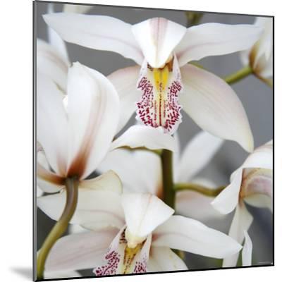 Orchid Closeup I-Nicole Katano-Mounted Photo