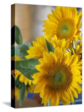 Sunny Sunflower II-Nicole Katano-Stretched Canvas Print