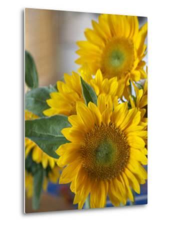 Sunny Sunflower II-Nicole Katano-Metal Print