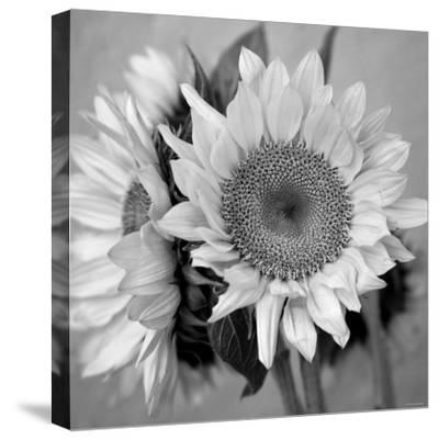 Sunny Sunflower I-Nicole Katano-Stretched Canvas Print
