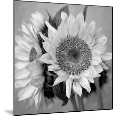 Sunny Sunflower I-Nicole Katano-Mounted Photo