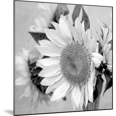 Sunny Sunflower II-Nicole Katano-Mounted Photo