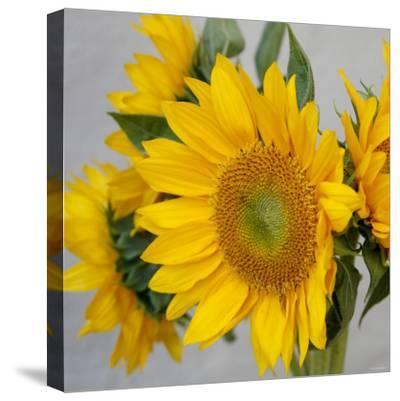 Sunny Sunflower IV-Nicole Katano-Stretched Canvas Print