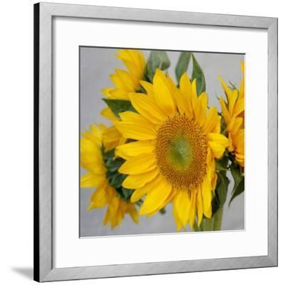Sunny Sunflower IV-Nicole Katano-Framed Photo