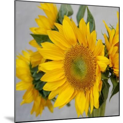Sunny Sunflower IV-Nicole Katano-Mounted Photo