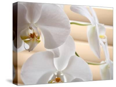 White Orchids III-Nicole Katano-Stretched Canvas Print