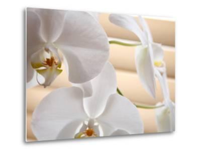 White Orchids III-Nicole Katano-Metal Print
