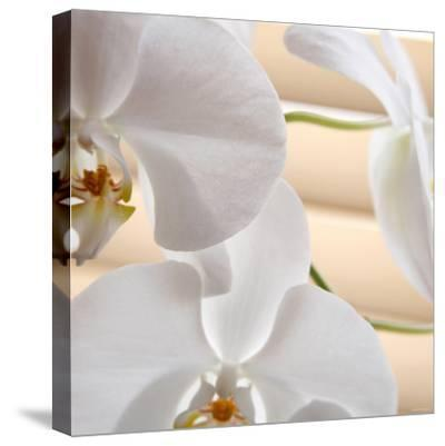 White Orchids I-Nicole Katano-Stretched Canvas Print