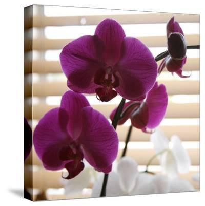 Purple Orchids I-Nicole Katano-Stretched Canvas Print