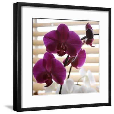 Purple Orchids I-Nicole Katano-Framed Photo