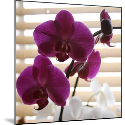 Purple Orchids I-Nicole Katano-Mounted Photo