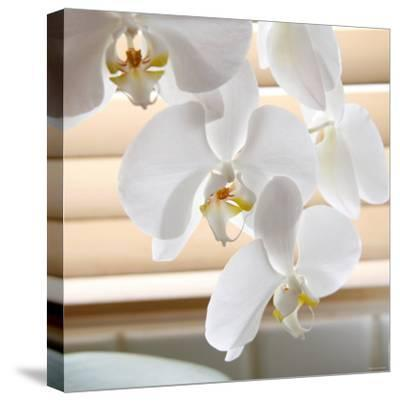 White Orchids II-Nicole Katano-Stretched Canvas Print