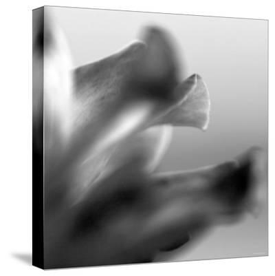 Petal Closeup III-Nicole Katano-Stretched Canvas Print