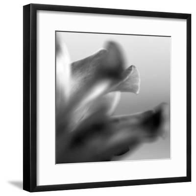 Petal Closeup III-Nicole Katano-Framed Photo
