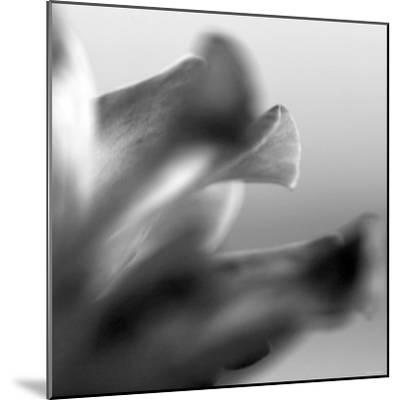 Petal Closeup III-Nicole Katano-Mounted Photo