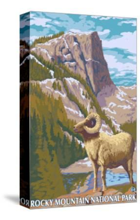 Big Horn Sheep, Rocky Mountain National Park-Lantern Press-Stretched Canvas Print