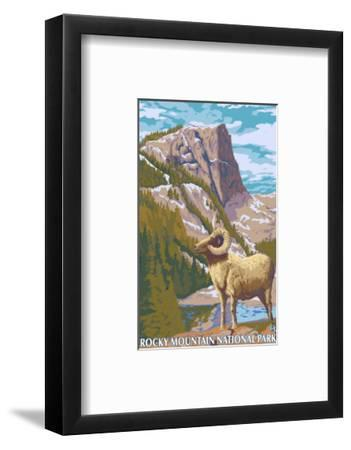 Big Horn Sheep, Rocky Mountain National Park-Lantern Press-Framed Art Print
