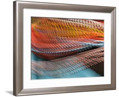 Samburu Dancer's Colorful Necklace, Samburu National Reserve, Kenya-Arthur Morris-Framed Photographic Print