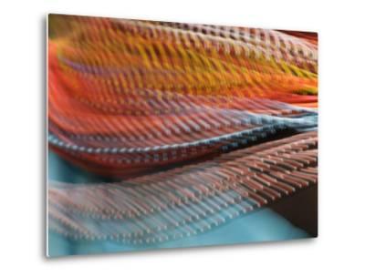 Samburu Dancer's Colorful Necklace, Samburu National Reserve, Kenya-Arthur Morris-Metal Print