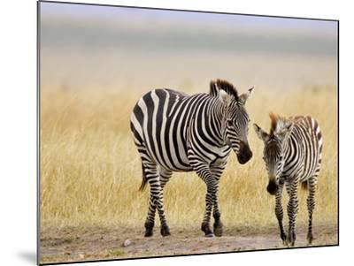 Zebra and Juvenile Zebra on the Maasai Mara, Kenya-Joe Restuccia III-Mounted Photographic Print
