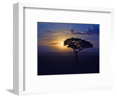 Early Sunrise on Vulture Gliding in Silhouetted Tree of the Maasai Mara, Kenya-Joe Restuccia III-Framed Photographic Print