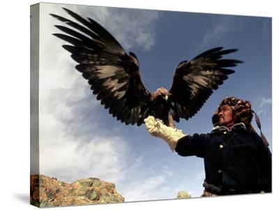 Takhuu Raising His Eagle, Golden Eagle Festival, Mongolia-Amos Nachoum-Stretched Canvas Print