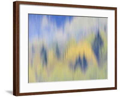 Abstract of Fall Colors of Spruce and Hemlock, Nuuksio National Park, Finland-Arthur Morris-Framed Photographic Print