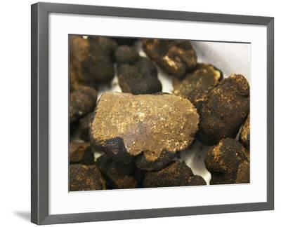 Truffles at La Truffe De Ventoux Truffle Farm, Vaucluse, Rhone, Provence, France-Per Karlsson-Framed Photographic Print