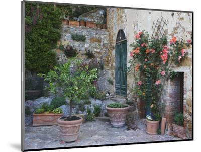 Potted Plants Decorate a Patio in Tuscany, Petroio, Italy-Dennis Flaherty-Mounted Photographic Print