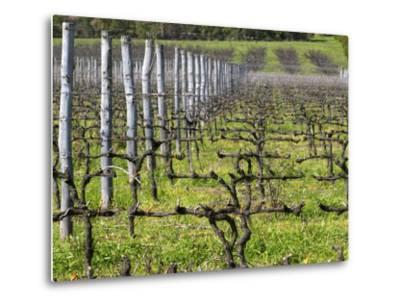 Vineyard in Cordon Royat, Bodega Pisano Winery, Progreso, Uruguay-Per Karlsson-Metal Print