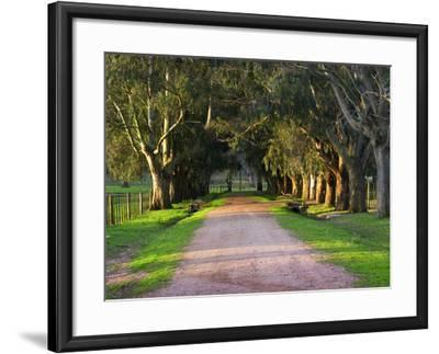 Tree Lined Country Road at Sunset, Montevideo, Uruguay-Per Karlsson-Framed Photographic Print