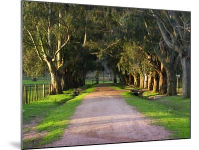 Tree Lined Country Road at Sunset, Montevideo, Uruguay-Per Karlsson-Mounted Photographic Print